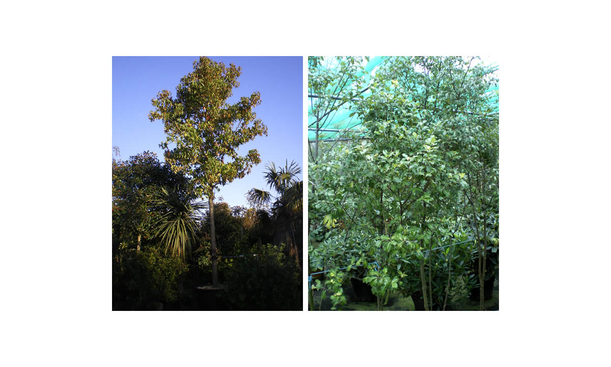 outdoor trees image seven